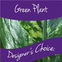 Green_Plant_Designers_choice